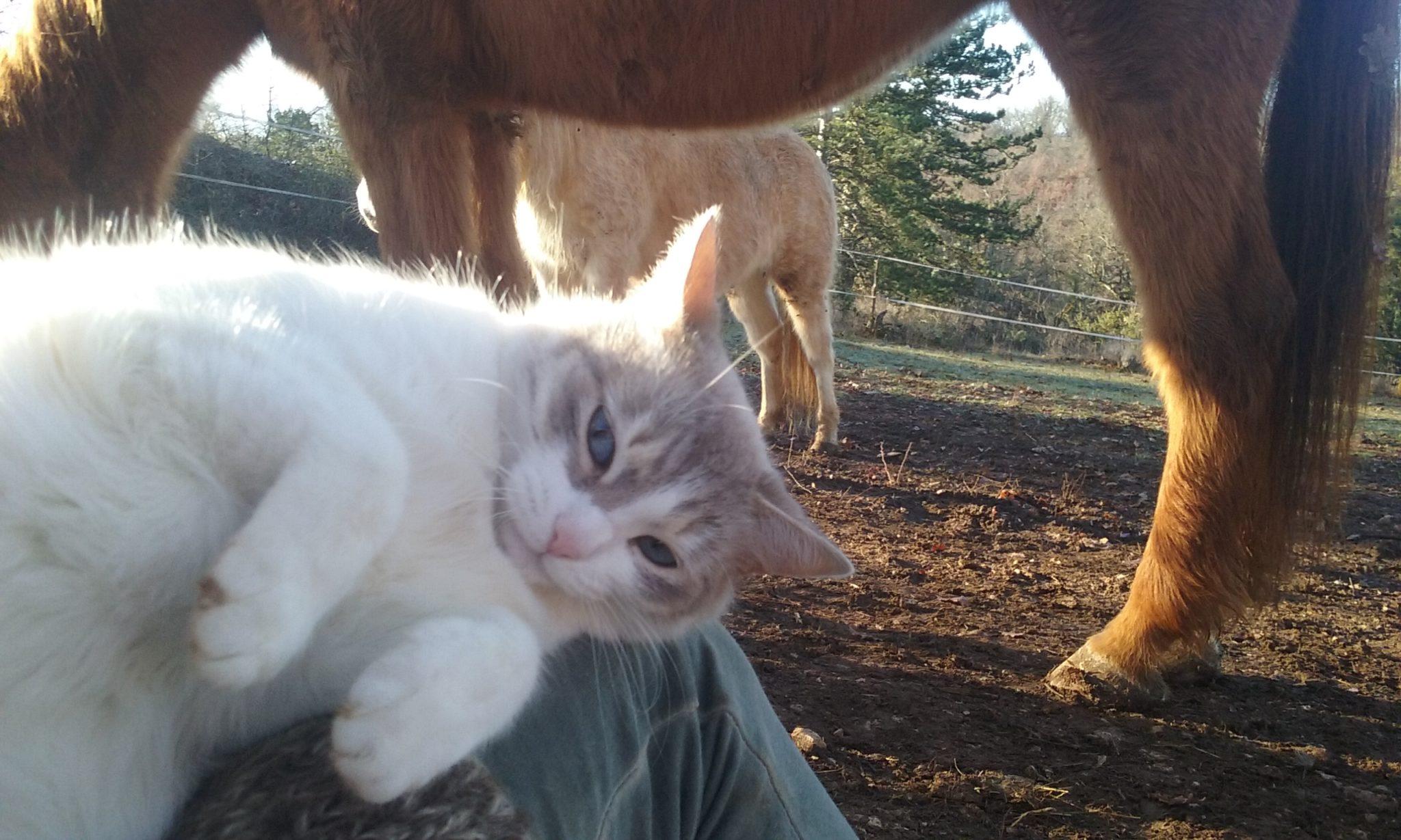 Java et les chevaux
